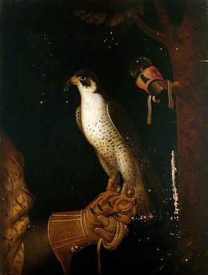 A Falcon on a Gloved Hand