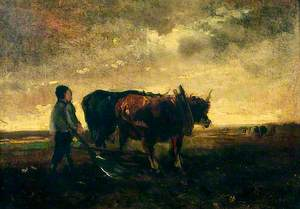 Oxen Ploughing at Evening