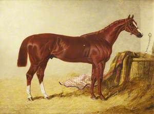 'Elis', Winner of the St Leger Stakes, 1836, in a Loose Box