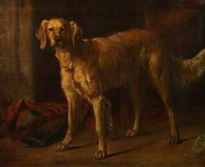 Dog 'Braan'