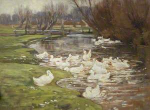 Pond with Ducks