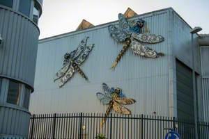 The Regency Dragonflies of Hollingdean