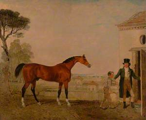 'Sultan' at the Marquess of Exeter's Stud, Burghley House
