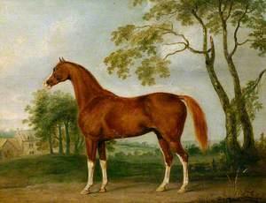 'Grosvenor Arabian'
