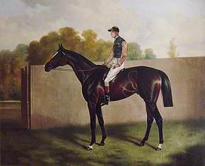 'Florizel II'