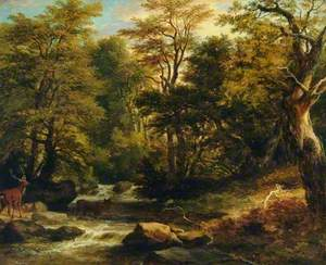 Forest, Gowbarrow Park, Ullswater, Cumbria