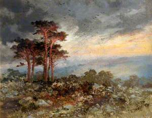 Study of Pines, Worlebury Woods