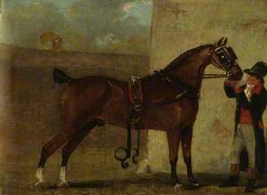 Carriage Horse Owned by Thomas Southwood of Lowton