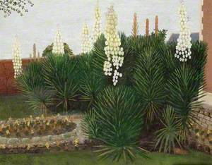 Yuccas at Cockmill Farmhouse, Pilton