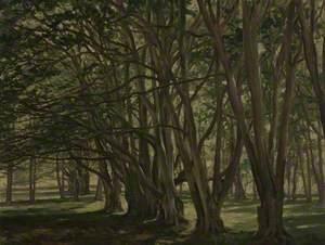 Beech Trees, Carmichael