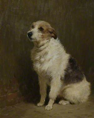 Portrait of 'Pilu', a Performing Dog