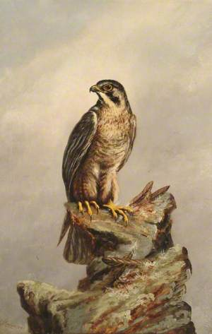 Birds of Prey, Kestrel