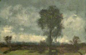 Trees and Dark Sky