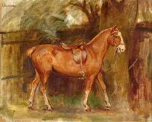 The Chestnut Hunter