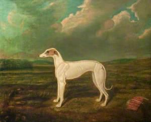 Portrait of a Greyhound, 'Susan' Whitehead, Winner of the Biggar St Leger (1856)