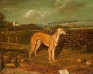 Portrait of a Greyhound, 'Sunshine', Winner of the Biggar St Leger (1855)