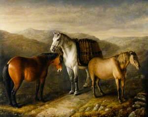 West Highland Ponies