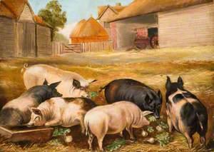 The Pretty Pigs