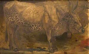 Roman Ox (Standing)