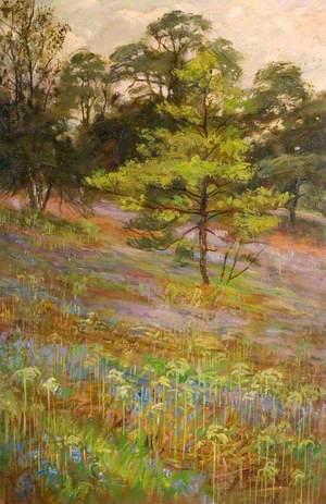 Bluebells, Cliff Park, Rudyard