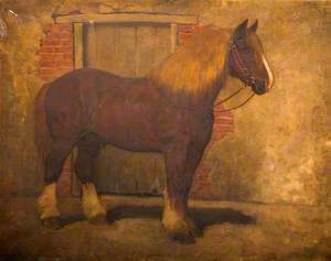 Shire Horse