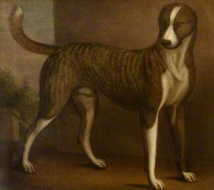 Lord Windsor's Dog, 'Banquo'