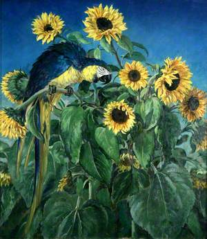 Macaw and Sunflowers