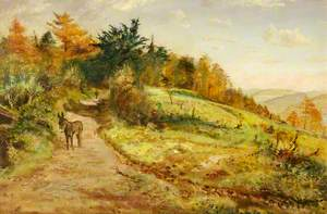 Donkey on a Path