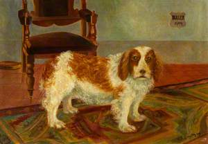 'Buller', the Moss Cottage Dog