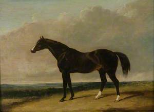 The Racehorse, 'Camel'