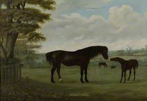Horses in a Landscape