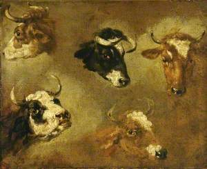 Studies of Cows' Heads