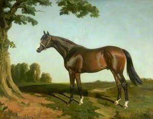 'Royal Lancer', Winner of 1922 St Leger Stakes