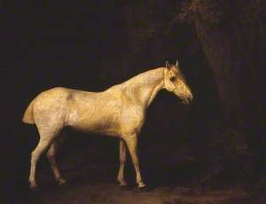 Horse in the Shade of a Wood