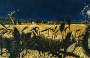 Summer: Young September's Cornfield