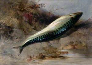 A Mackerel on the Seashore