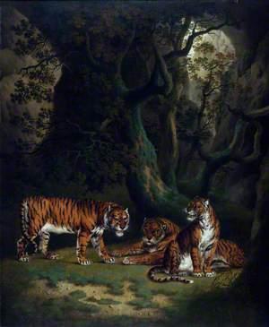 Tigers in a Jungle