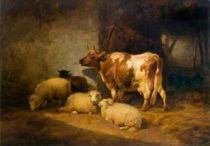 A Cow and Sheep