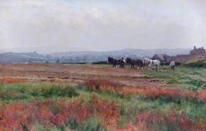 Summer Ploughing