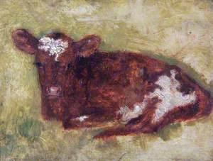 Brown Calf*