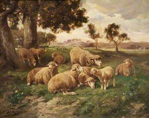 Landscape and Sheep