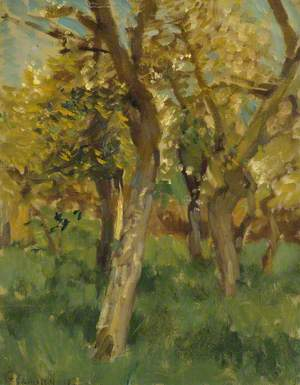 Study of Blossoming Trees in an Orchard
