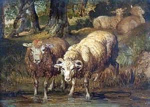 Sheep by a Stream