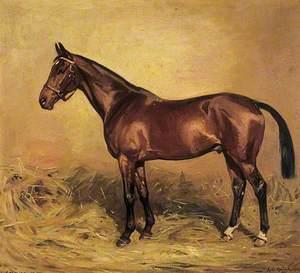 Horse Portrait, 'Screwdriver'