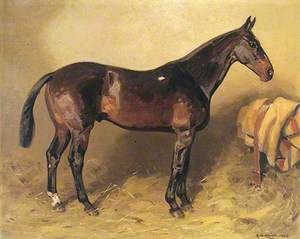 Horse Portrait, 'Ruka'
