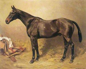 Horse Portrait, 'Lancer'