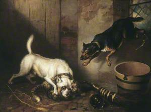 Two Dogs Mauling a Cat