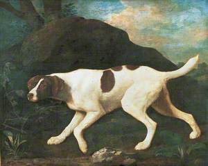 'Phillis', a Pointer of Lord Clermont's