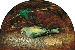 A Dead Linnet