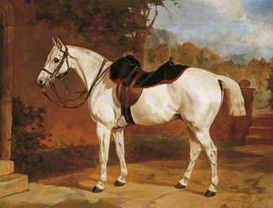 'Ali', Portrait of a Horse